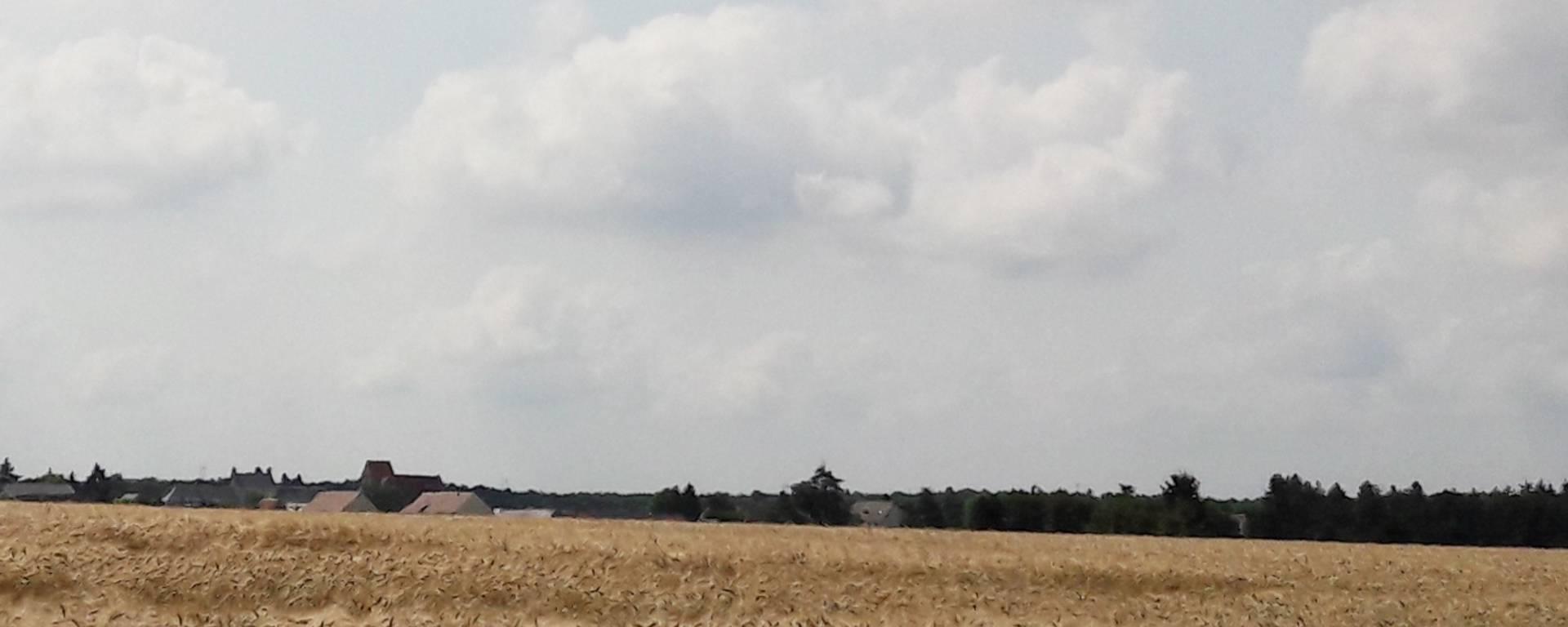 Les champs de blé à perte de vue en Petite Beauce