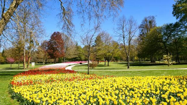 Les 100.000 tulipes du château de Cheverny. © OTBC