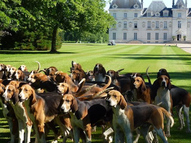 Die Hundemeute von Cheverny im Schlosspark